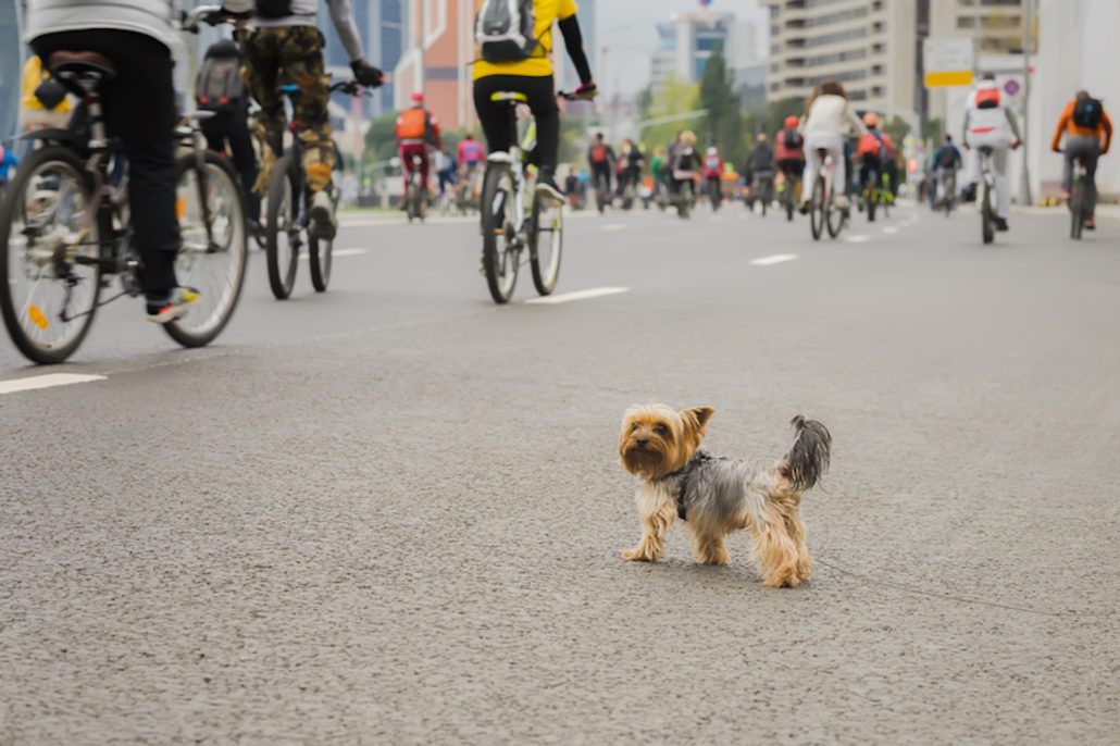 Funny little dog watching on Mass bicycle ride in city, marathon. Sport, fitness and healthy lifestyle concept. Abstract blurred sport background, place for your text